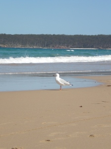 SAM the SEAGULL