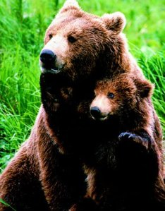 Grizzly-Cub-and-Father